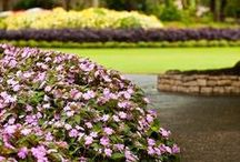 Landscaping with SunPatiens / Sun or Shade, Rain or Shine, Spring thru Fall™