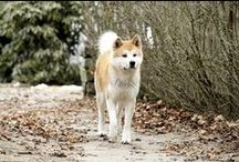 Hachiko  / by Addie