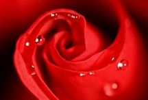Red like love...