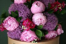 Flores y jArdineria