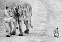 Löwen <3 *-*