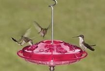 Free Standing Bird Feeder / Free standing bird feeder for your backyard so you can enjoy watching our feathered friends. Some are squirrel proof and some are very elegant in design.