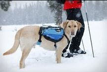 Hiking Gear for Dogs / Hiking gear for dogs is about taking man's best friend on your outdoor adventures, whether in the wilderness or about town.