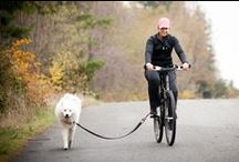 Bicycle Dog Leash / With a bicycle dog leash you exercise your pet and yourself at the same time.