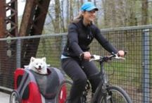 Bicycle Pet Trailers / Bicycle pet trailers let you bring your dog along for the ride.