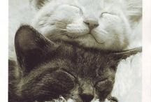 Cute pets ❤️
