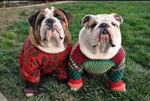 Ugly Christmas Sweaters for Dogs / Ugly Christmas sweaters for dogs will be the hit of the season.