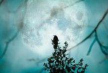 Black birds fly from the moon... / Черные птицы слетают с луны...