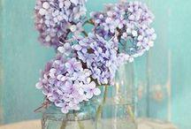 FLOWERS & CACTUS