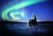 Horses / by Mhara_Projetos