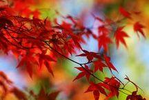 Onze Suus bekent kleur / Alles om ons heen heeft kleur. Kleur nemen wij waar en nog belangrijker: het doet wat met je! Kleuren ontstaan uit licht. Iedere kleur heeft een eigen golflengte, frequentie en energie. Onze Suus krijgt energie van kleur #color #colour #kleurvol