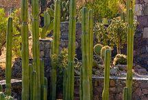 per il giardino / bonsai