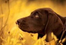 Dog's Heaven / by Tunde Simon