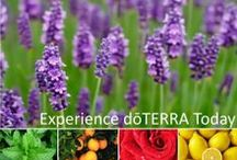 doTERRA-Pure Life Oils / doTERRA Essential Oils & Wellness Products / by Danielle Dickenson
