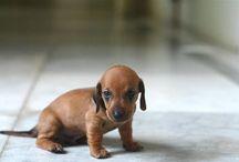 Pets / Sweety
