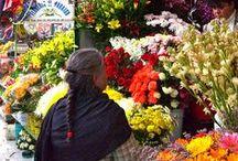 Flores y mercados