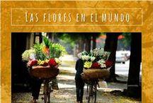 Las mujeres, las flores y el mundo.