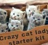 Crazy Cat Lady / * A not really serious board about cat loving... *