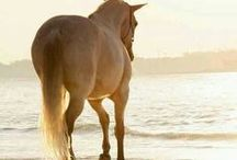 Horses&Riding