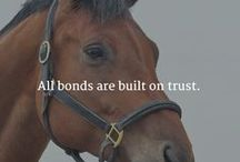 Horses&Riding Quotes