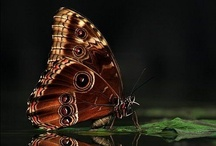 butterfly&bugs