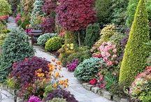 Zöldövezet - Garden