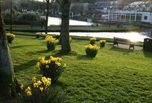 Spring / Newquay in bloom is a sight to behold and what better time to see it than in the spring...