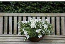 Perkplanten / De kleur in het outdoor assortiment.
