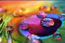 Színpompa / colorful / zöld, kék, lila ...pompa