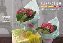 Alexandrium Woonmall / Kom in contact met de consument met een promotie in Woonmall Alexandrium.