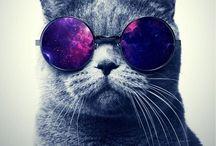 ☆動物のiPhone壁紙 / Animal iPhone Wallpaper
