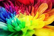 ❀ Farbenspiel->Blumen❀