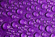 ~ Purple ~