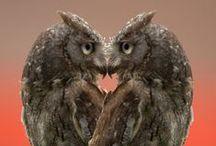 -O.o- Owls -o.O-