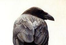 Raven-crow