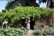 Portland Urban Gardening / Did you know that according to the USDA about 15% of the world's food supply is now grown in urban centers? Take a look at some of these great urban gardens in Portland & beyond!