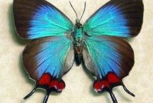 Animals > Butterflies xo / There is something magical about this species, one of the millions that inhabits this planet of ours. Keva xo