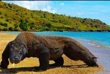 Animals > Reptiles xo / Reptiles are cold-blooded vertebrate & are tetrapod animals comprising today's turtles, tortoises, crocodiles, alligators, snakes, lizards & tuatara. They are distinguished by having a dry scaly skin, and typically laying soft-shelled eggs on land. Some of them are cute & others are incredibly scary looking like the Komodo Dragon or the giant crocodiles you can view on interesting youtube documentaries I have pinned. Fascinating to say the least, these prehistoric animals are survivors. Keva xo