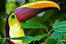 Animals > Birds & Insects xo / A diverse and colourful range of birds and insects that inhabit our planet.  Some appear scary and some are very beautiful. Check this board out.  Keva xo