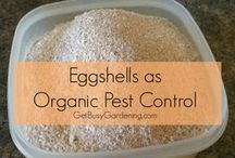 Organic Pest Control / All the best approaches to controlling unwanted pests in your organic garden. Keep your garden organic by using organic homemade and simple measures to rid any nuisances!  / by Bountiful Gardens