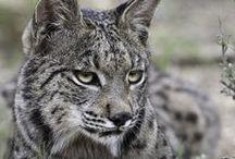 Survivors (Animals) / Wild nature creatures photography
