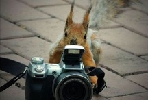 ๏ ardillas pillas ๏ (squirrel) / by ika tawa