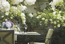 Garden ~  White / by Diane Church