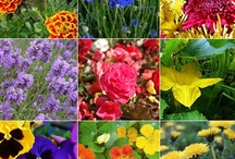 HEALTH ~ Herbs & Spices That Heal / by Diane Church
