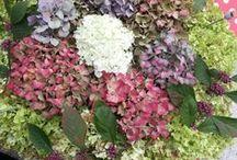 Mijn tuin- my garden / Alles uit eigen tuin