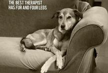 Therapy Dogs & Other Amazing Beings / Heartfelt moments, Quotes & Affirmations and Lessons for humans.