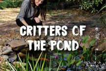 Critters of the Pond