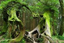 """Trees!  A Great Living Creature༺✿ / """"The clearest way into the Universe is through a forest wilderness.""""  ― John Muir"""