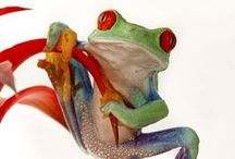 """Frogs are Beautiful / """"Frog in a little pond can be much happier than fish in a vast ocean!""""  ― Mehmet Murat ildan"""