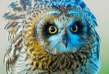 〜 Owl's  H๏̯͡๏T of a Time 〜 / ' A wise old owl sat on an oak; The more he saw the less he spoke; The less he spoke the more he heard; Why aren't we like that wise old bird? ' -Nursery Rhyme